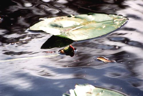 plasticwater1.jpg